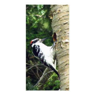 Woodpecker Photo Card