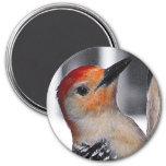 Woodpecker Portrait Magnet