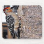 Woodpecker Portrait Mouse Pads