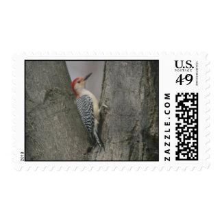Woodpecker Postage Stamp