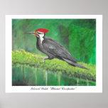 Woodpecker poster print