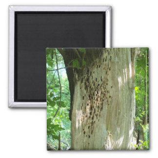 Woodpecker Tree Magnet