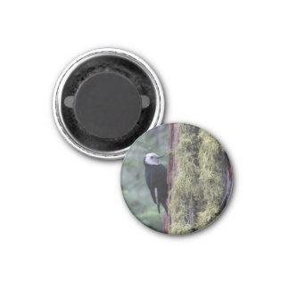 Woodpecker- Yosemite 1 Inch Round Magnet