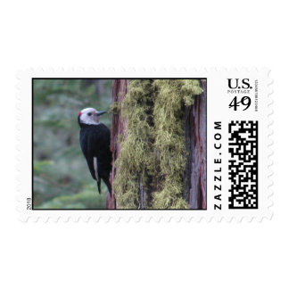 Woodpecker- Yosemite Postage