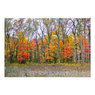"""""""WOODS AGLOW WITH FALL COLOR""""/PHOTOGRAPHY POSTER"""