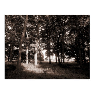 Woods Bute Park, Cardiff II Postcard