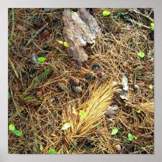 Woods Floor-Pinecones,etc..Poster