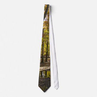 Woods with standing water tie