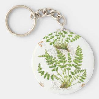 Woodsia Fern Basic Round Button Keychain
