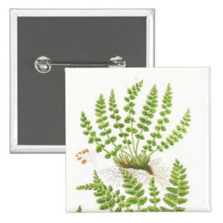 Woodsia Fern Buttons