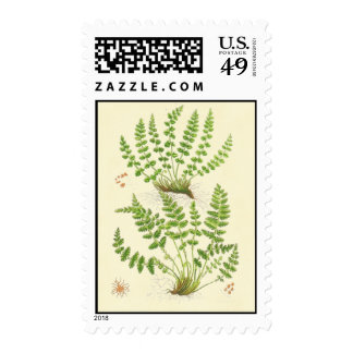 Woodsia Fern Postage Stamps
