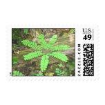 Woodsy Fern Stamp