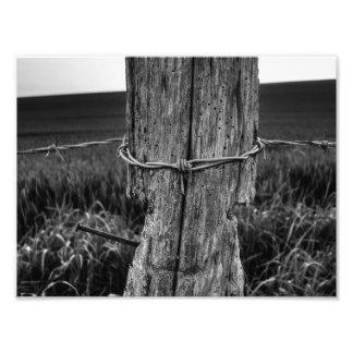 Woodworm Arte Fotografico
