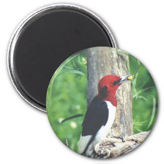 Woody Red Headed Woodpecker 2 Inch Round Magnet
