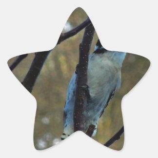 Woody Star Sticker
