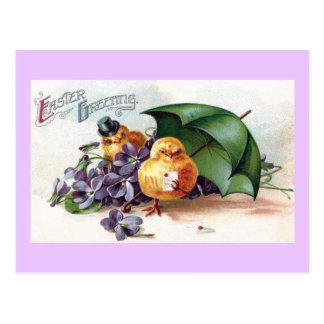 Wooing Chicks and Violets Vintage Easter Postcard