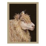 Wool gatherer postcard