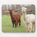 Woolly Alpacas ~ mousepad