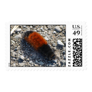 Woolly Bear Stamps