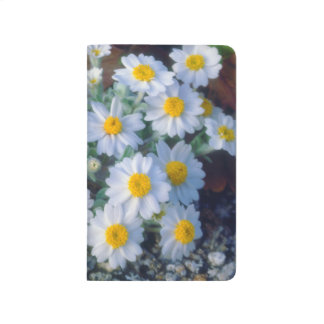Woolly Daisy Wildflowers Journals