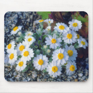 Woolly Daisy Wildflowers Mouse Pad