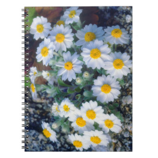 Woolly Daisy Wildflowers Spiral Note Book