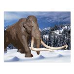 Woolly Mammoth Postcard