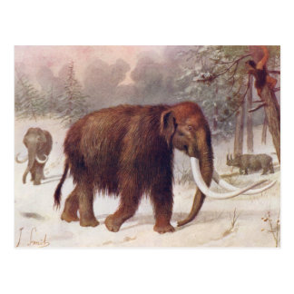 Woolly Mammoth Prehistoric Animal Antique Print Postcard