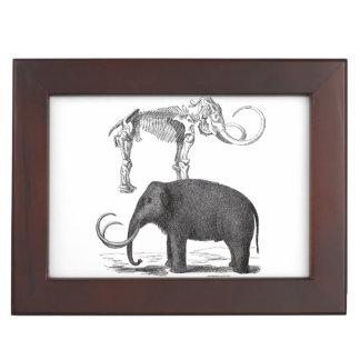 Woolly Mammoth Prehistoric Elephant and Skeleton Memory Box