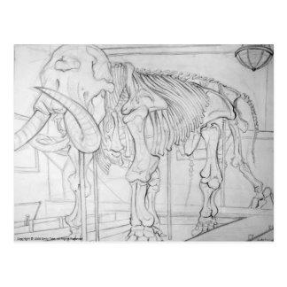 Woolly Mammoth Skeleton Postcard