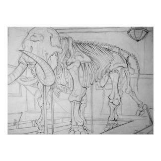 Woolly Mammoth Skeleton Poster