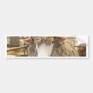 Woolly sheep face bumper sticker