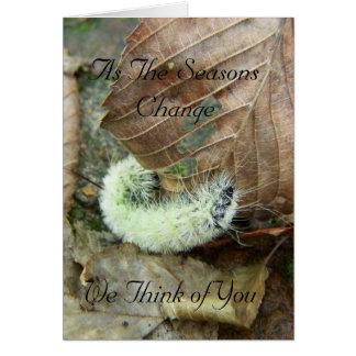 Wooly Bear Worm Fall Season Greeting Card
