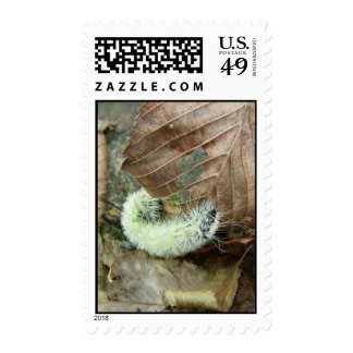 Wooly Bear Worm Postage Stamp