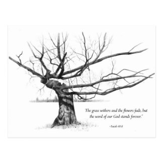 Word Of God Forever: Gnarled Tree in Pencil Postcard