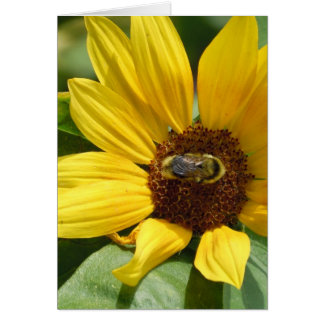 Worker Bee on Sunflower Card
