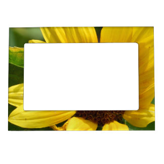 Worker Bee on Sunflower Magnetic Picture Frame
