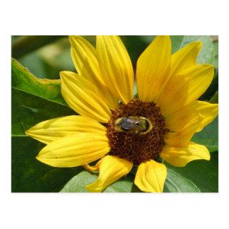 Worker Bee on Sunflower Postcard