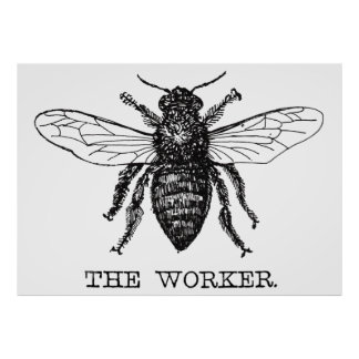 Worker Bee Pen and Ink Illustration Poster