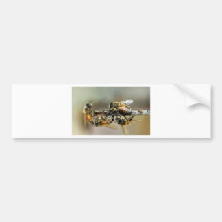 Worker honey bees bumper sticker