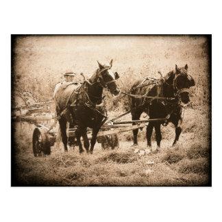 Working Amish Horses Sepia Postcard