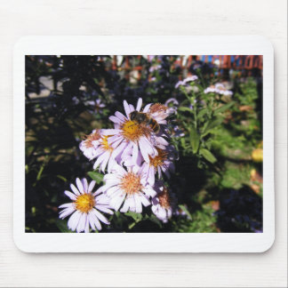 Working Bee Daisies Mouse Pad