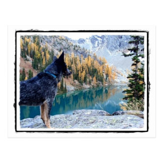 Working Dog Max at Work Conservation Canines Post Card