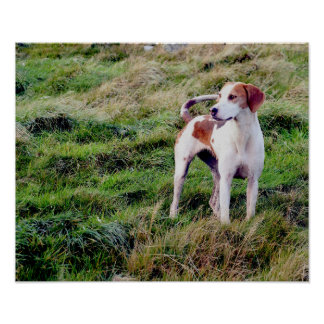 Working Dog Poster/Print Poster