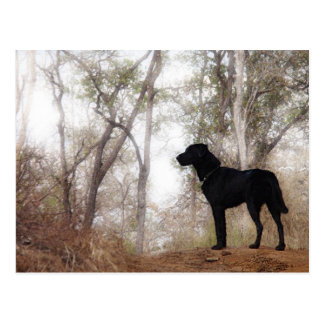 Working Dog Scooby at Work Conservation Canines Postcard