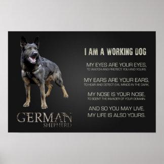 Working German Shepherd Dog  - GSD Poster