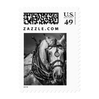 Working Horse Postage Stamp