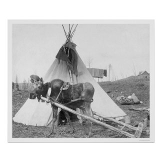 Working Moose Teepee 1916 Poster