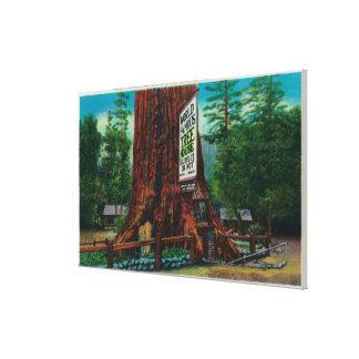 World Famous Tree House, Lilley Redwood Park Gallery Wrap Canvas
