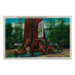 World Famous Tree House, Lilley Redwood Park Poster